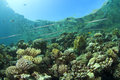 Coral reef scene cornetfish on in red sea Stock Images