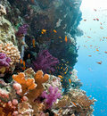 Coral reef scene - panorama Royalty Free Stock Photos