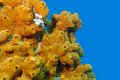 Coral Reef With Sea Sponge Iso...