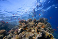 Coral-Reef in shallow water with fishes around Stock Image