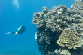 coral reef with stony corals and divers at the bottom of tropical sea Royalty Free Stock Photo