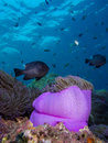 Coral reef tropical Stock Photo