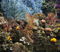 Coral and reef underea Stock Image