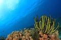 Coral reef underwater Lizenzfreie Stockfotografie