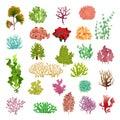 Coral and seaweed. Underwater flora, sea water seaweeds aquarium game kelp and corals. Ocean plants vector set