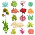 Coral and seaweed. Underwater flora, sea water seaweeds aquarium kelp and corals. Ocean plants vector set