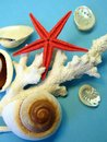 Coral, shells and starfish
