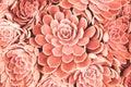 Coral Toned Succulent