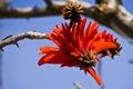Árbol flor