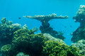 Coral world, Underwater Observatory in Eilat Royalty Free Stock Photo