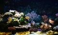 Corales Fotografía de archivo libre de regalías