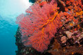 Corals at Bali Royalty Free Stock Images
