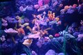 Corals in captivity with trails of fish an aquarium Stock Image