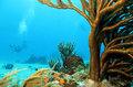 Corals and divers with in the background cozumel mexico Royalty Free Stock Image