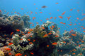 Corals and fishes of the Red Sea Stock Image