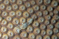 Corals in reproduction Royalty Free Stock Photo