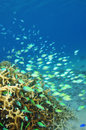 Corals underwater Royalty Free Stock Photo