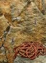 Corda e roccia rampicanti Fotografie Stock
