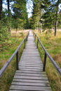 Corduroy way in a bog Stock Photography