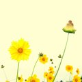 Coreopsis grandiflora yellow flowers on a cream background to a photo color toning is applied Stock Images