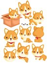 Corgi Vector Set