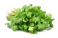 Coriander fresh on white Royalty Free Stock Image