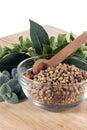 Coriander Seed Royalty Free Stock Photo