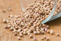 Coriander seeds Stock Images
