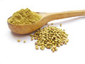 Coriander whole seeds and powder isolated on white background Royalty Free Stock Photography