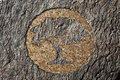 Cork tree carved on a tree trunk Royalty Free Stock Images