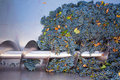 Corkscrew crusher destemmer winemaking with grapes in cabernet sauvignon Stock Images