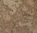 Corkwood background surface of a tile closeup texture Royalty Free Stock Images