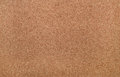 Corkwood texture Royalty Free Stock Photo
