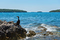 Cormorant on the beach in Istria Royalty Free Stock Photo