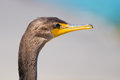 Cormorant Profile Royalty Free Stock Photo