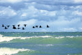 Cormorants flying over surface of the sea Stock Photography