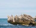 Cormorants on Limestone Royalty Free Stock Photo