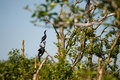 Cormorants in nature Royalty Free Stock Images