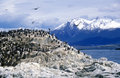 Cormorants on rocks near Beagle Channel and Bridges Islands, Ushuaia, southern Argentina Royalty Free Stock Photo