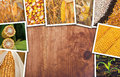 Corn in agriculture, photo collage Royalty Free Stock Photo