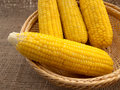 Corn boil put in the basket Stock Photography