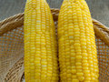 Corn boil put in the basket Royalty Free Stock Photos