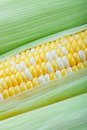 Corn Closeup Royalty Free Stock Photos
