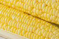 Corn closeup isolated on white background Stock Images