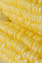 Corn closeup isolated on white background Royalty Free Stock Images