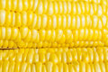 Corn closeup isolated on white background Stock Photo