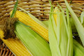 Corn on cob Royalty Free Stock Photography