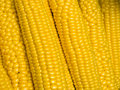 Corn on the cob Stock Image