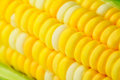 Corn cob Royalty Free Stock Photos