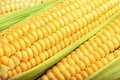 Corn cob between green leaves for you design Stock Photo